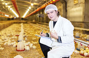 Five challenges of starting a poultry farming business in Africa and solution
