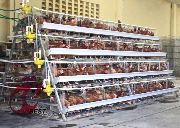 What is the advantage of automatic feeding line in poultry farm