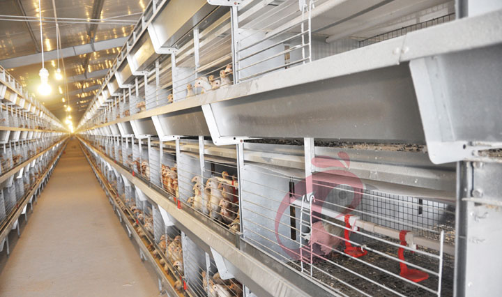 battery cage 1