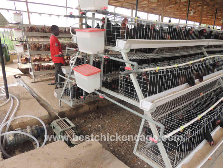 Manure Removal System